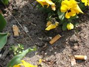 blomsterskod