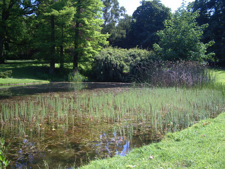 Reemtsmapark: Teich