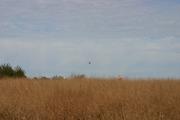 '07 Dakota Farm Pheasant Opener 037.JPG