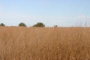 '07 Dakota Farm Pheasant Opener 049.JPG