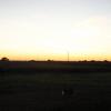 '07 Dakota Farm Pheasant Opener 053.JPG