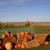 '07 Dakota Farm Pheasant Opener 118.JPG