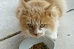 Katze Futter
