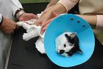 Katze Tierarzt
