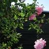 Roserne i sommerhuset