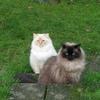 Alfred og Bertram