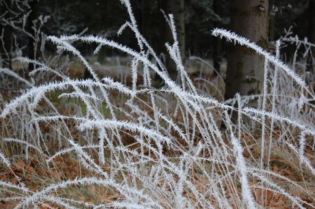 Flere iskrystaller på græsstrå