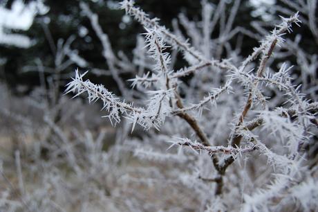 Nærbillede af isklædt græsstrå