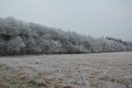 En lysning i skoven med et fint hvidt slør