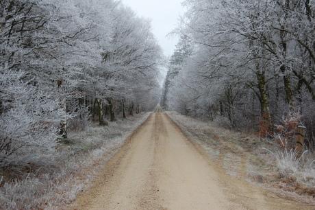 En skovvej ved vintertid