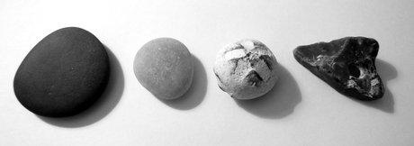 S4 randsten: sort, hvid, forstenet søpindsvin, hulko