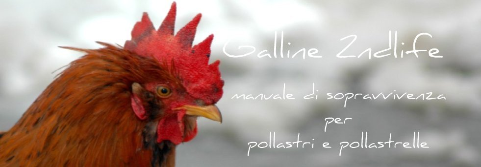 Galline 2ndlife