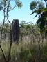 Termite Mounds, Litchfield National Park