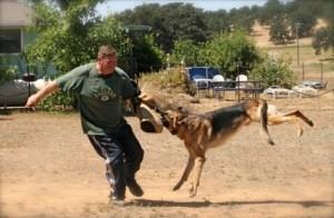 German Shepherd Dog Training Near Me