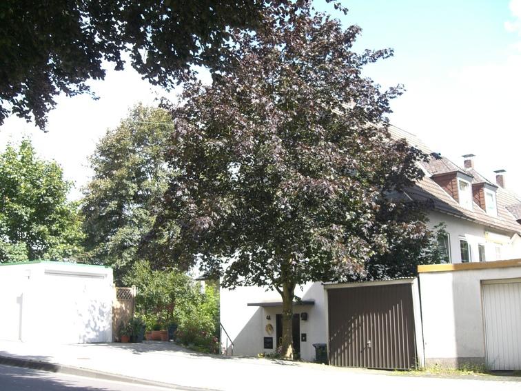 Baum in Siegen am Giersberg