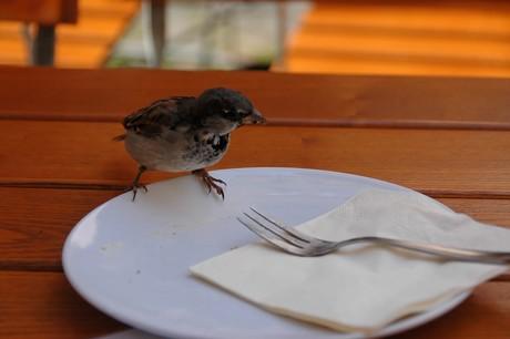 Tischgeselle