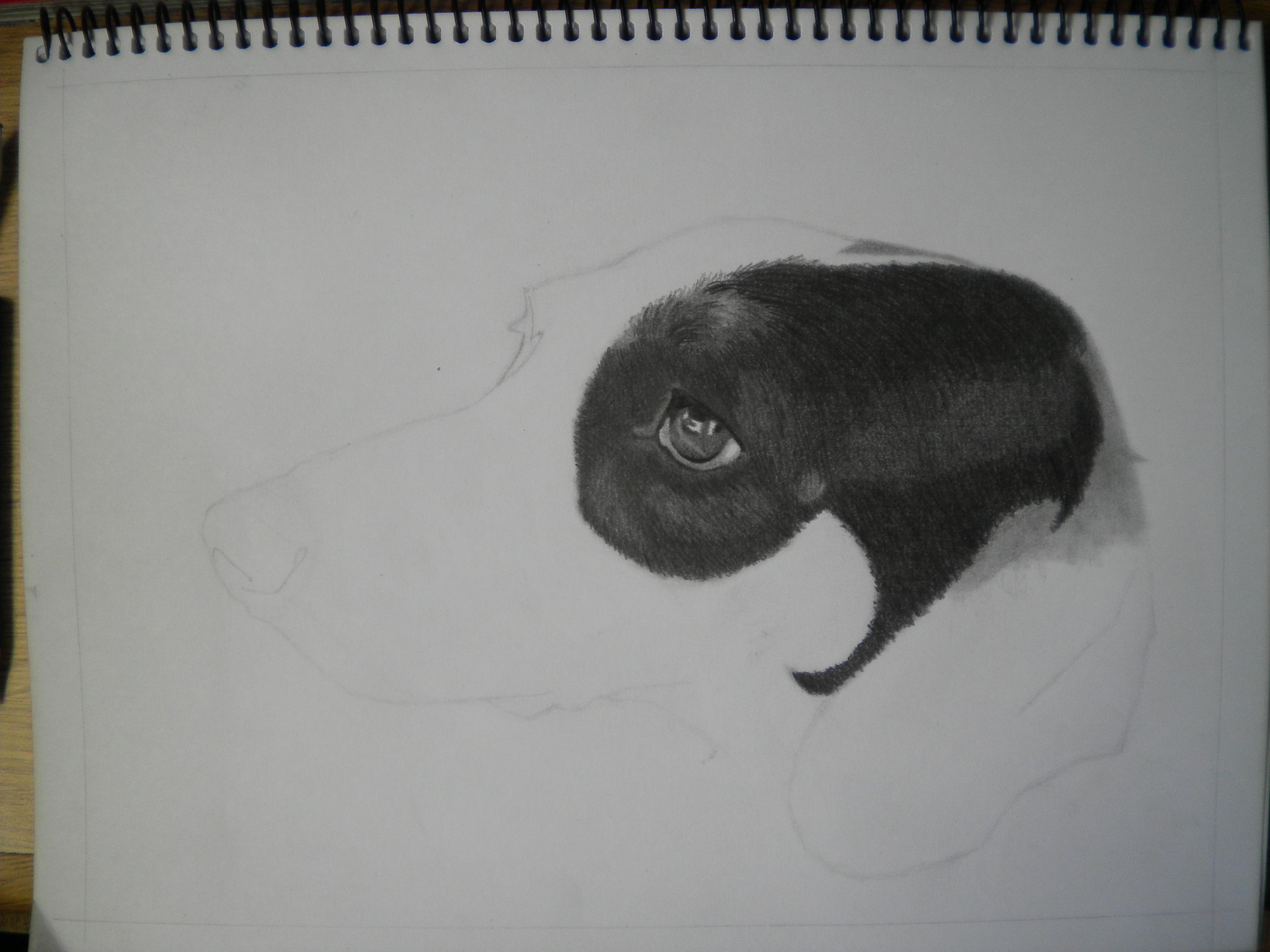 Mi perra lulu [retrato]