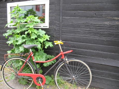 Cykel. Foto: Lisa Risager